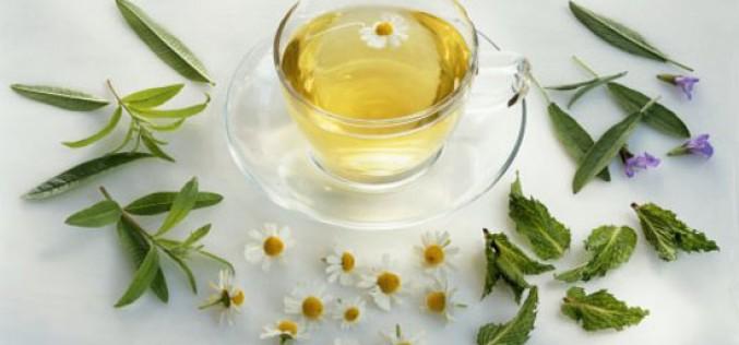 Conoce cuáles son las mejores plantas medicinales chilenas