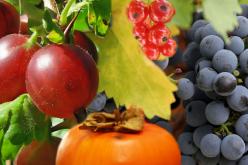 Ocho compuestos funcionales de los alimentos que pueden alargar tu vida