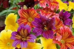 Conozca sobre las flores comestibles en los diálogos gastronómicos de Duoc Uc