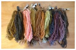 Proyecto Tinte Austral: La esencia del color en la flora nativa de Aysén