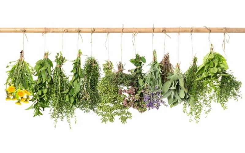 Conoce el poder de estas hierbas que te ayudarán a pasar agosto