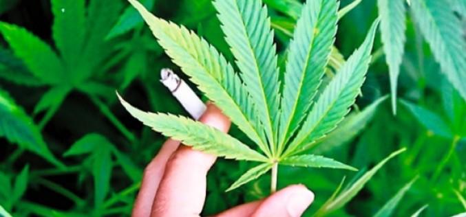 Sociedades científicas buscan evitar que se legalice el consumo recreativo de marihuana