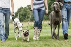 Tips para evitar que te roben a tu mascota