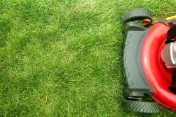 Cuidados que requieren los jardines en invierno