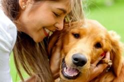 Diez errores más comunes que los amos cometen con sus mascotas