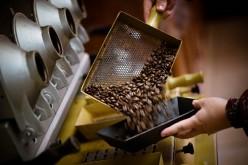 Britt suma café orgánico cultivado bajo sombra