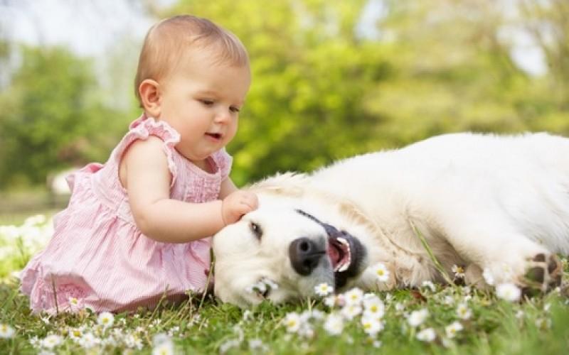 Consejos para lograr una buena convivencia entre guaguas y mascotas