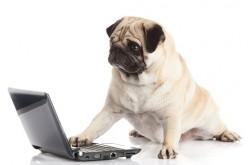 Tienda online llega con novedosos accesorios para mascotas