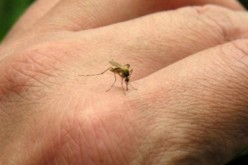 Vitaminas B  sirven como repelentes naturales de mosquitos y zancudos