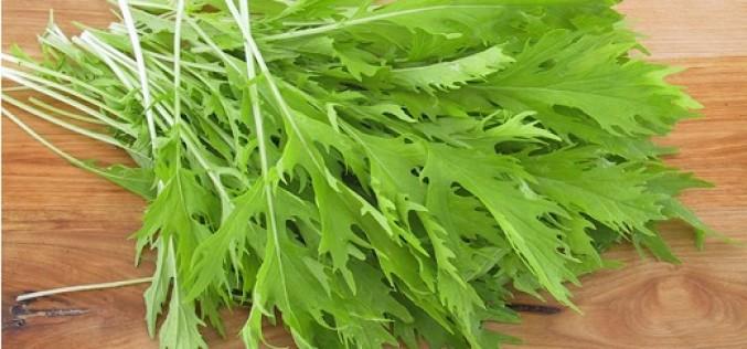 Mizuna: la ensalada orgánica rica en antioxidantes y propiedades antiinflamatorias