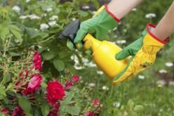 Cuida al jardín de plagas y enfermedades